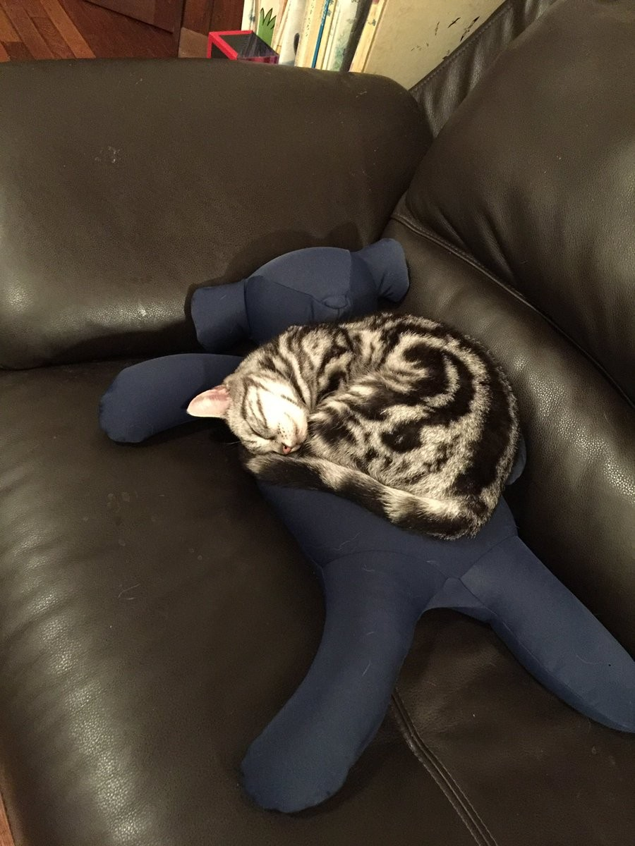 ▲▼網友發現貓咪偷吃義大利麵。(圖/翻攝自推特,BCAT_BGIRL)