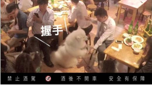 ▲▼狗狗集體出現在熱炒店靠美色賣酒。(圖/業務提供)