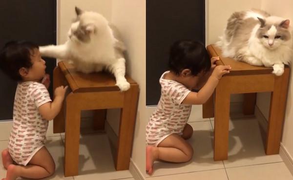 ▲好喜歡你唷~偷摸貓主子被巴頭 小女孩「玻璃心碎了」。(圖/翻攝自Happy Pets粉專)