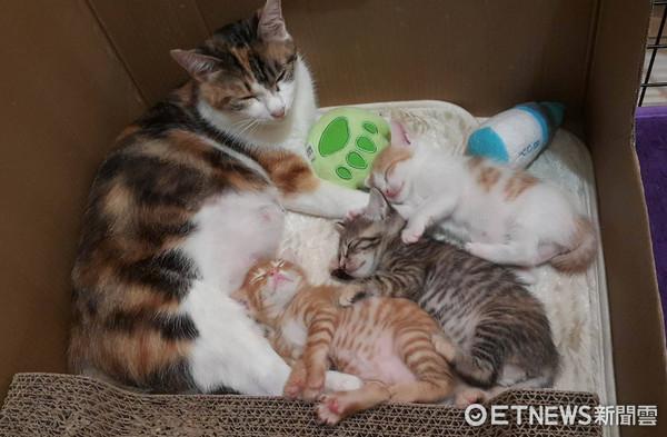 ▲三花貓抱孩子幸福入睡 樓上有巨嬰監視:人家也想抱抱。(圖/網友梅毛授權提供)