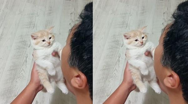 ▲奴才開心逗笑小貓咪,但貓咪表情無奈。(圖/翻攝自IG「coolant27」)