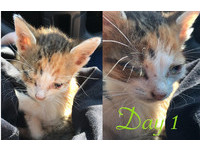 ▲▲只有1/2存活率!小貓雙眼化膿、瘦見骨 5個月後美翻天。(圖/翻攝自The Meow)。