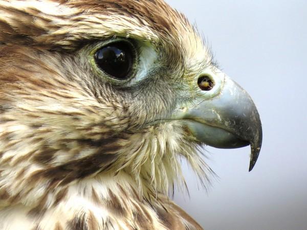 老鷹。(圖/取自librestock網站)