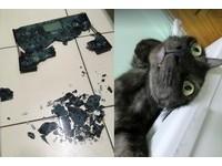 ▲碎裂成滿地的體重機遭貓星人「芝麻」和「黑糖」虐爆。(圖/網友馮宣茹提供,請勿隨意翻拍,以免侵權。)