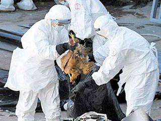 由於感染者已从上海扩散到安徽,南京,也让外界担心禽流感是否真的开始