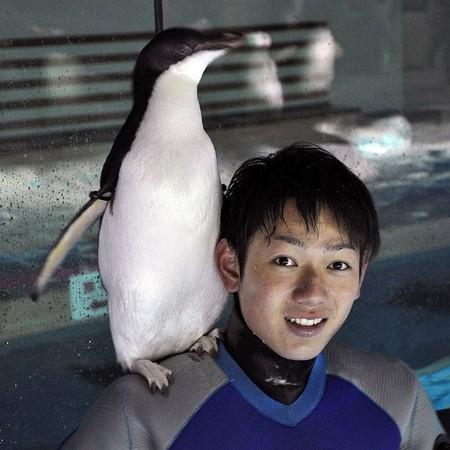 ▲名古屋港水族館的公企鵝戀上帥哥飼養員。(圖/翻攝自名古屋港水族館 臉書)