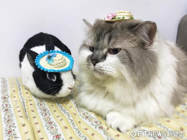 ▼兔兔哥哥:你看我们戴帽子好可爱! 布丁:我等下要收钱.