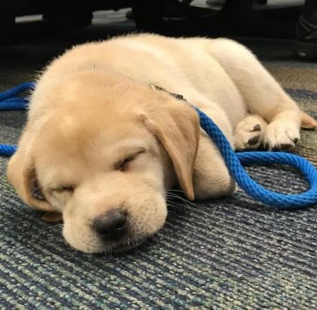累趴下的可爱图片动物