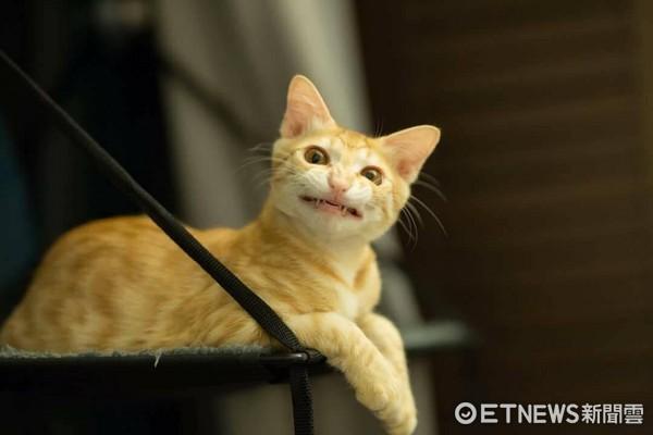 萌橘猫拍照耍心机 侧脸睁圆眼.嘴角还偷上扬俏皮甜笑