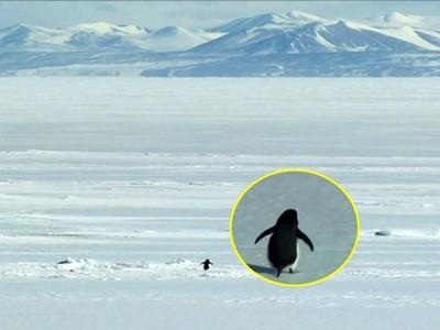 動物也會自殺?黑狗2次跳河死意堅決、企鵝著魔走進深山