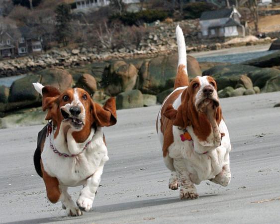 2011年十大可爱动物照片