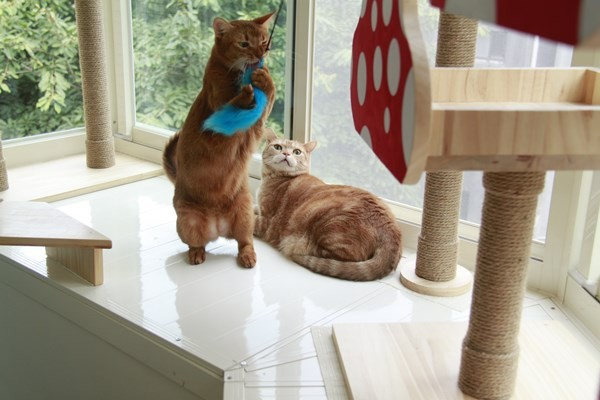 爱猫人妻打造阳台游乐场 让小孩与宠物和谐共处
