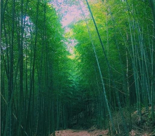 五元二角亭附近的竹林媲美京都岚山竹林小径.(图/网友