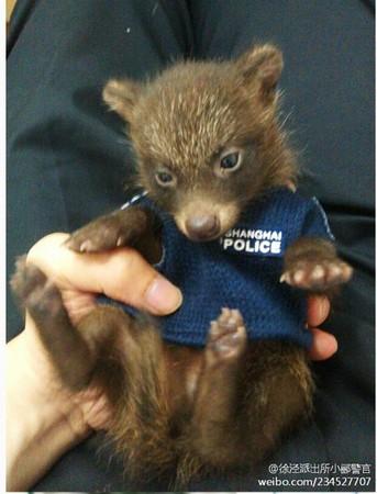 看到鞋盒里的小家伙全长不过50公分,几乎没有攻击性,警员将小动物带回