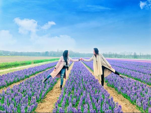 春天赏花去!荷兰「利瑟花田」骑脚踏车倘佯浪漫花海