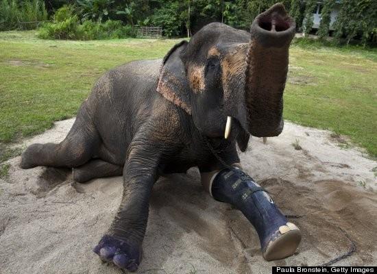大象救落水动物图片