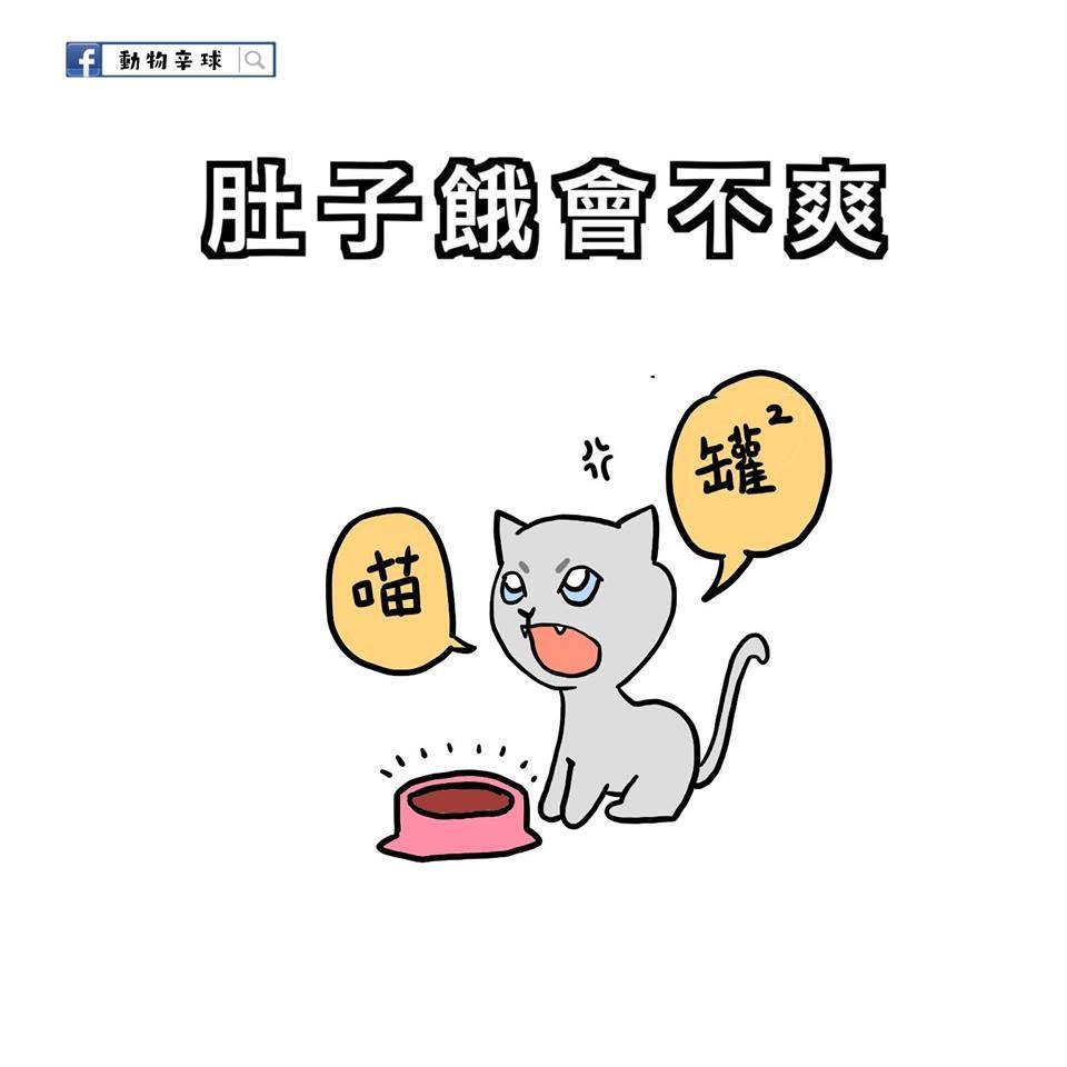 女人就是一只猫,肚子饿会发飙! 9种动物性格男人肯定有感