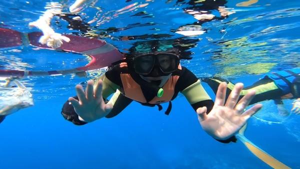 亚龙湾海底世界飞鱼