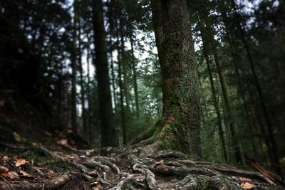 三兄弟結伴遊森林!夜深後再也沒出來…隔天發現三具赤裸屍體