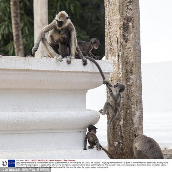小猴爬墙:妈,您的尾巴有够长! | ettoday宠物动物新闻