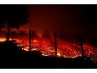 ▲▼ 加州野火肆虐。(圖/路透社)