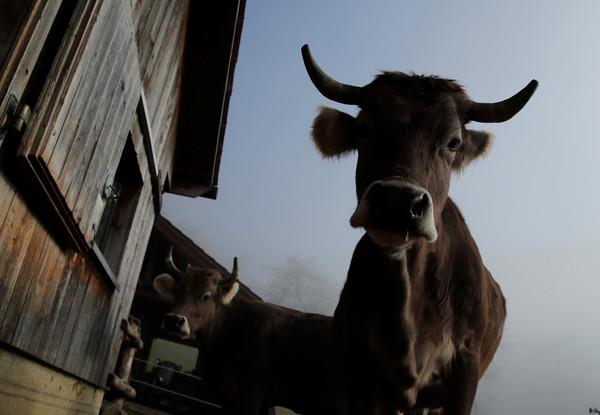 农村牛棚设计图片大全