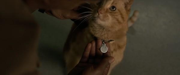 《惊奇队长》宠物猫有玄机! 更改原着向这部片致敬