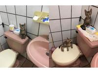 ▲▼浴室每月多一隻貓!3虎斑疑惑看奴才洗澡:幹嘛不用舔的?(圖/網友N Na Ha授權提供)