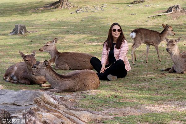 ▲▼遊客與奈良鹿。(圖/CFP)