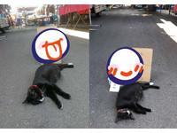 ▲菜市場浪貓愛睡路中央!暖心菜販放「搞笑紙條」保護牠。(圖/網友?黄秀蓮?提供,請勿隨意翻拍,以免侵權。)