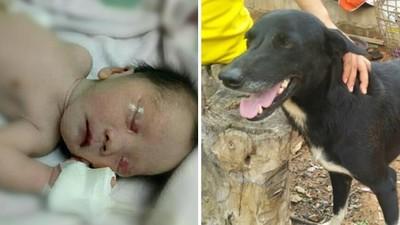 英雄狗勇救「泥土裡的活嬰」!靈鼻嗅到血味不停撥土,直到小腳丫露出來