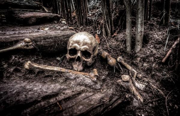 ▲▼人骨,骷顱頭,謀殺,棄屍,活人祭祀。(圖/取自免費圖庫pixabay)