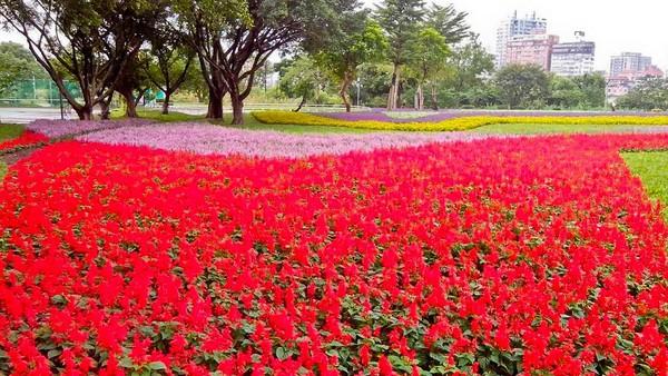 古亭河滨公园花海宛如一张颜色鲜艳的地毯.(图/取自