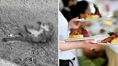 堅持給賓客吃「被撞死的動物」!準新人付20萬高薪,沒有廚師敢應徵