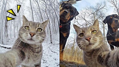 奴才拍不好,本喵自己來!虎斑貓超會「看鏡頭自拍」 還揪狗狗朋友一起