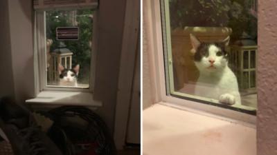 認錯鏟屎官?連4天出門被貓跟蹤 回家看向窗外..一雙眼盯得心裡發寒