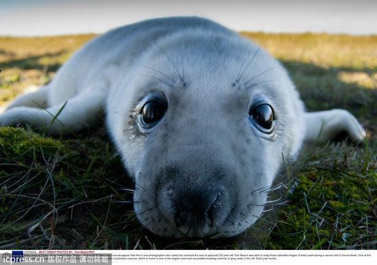 动物保护区「donna nook」,捕捉到这些与海豹宝宝「大眼瞪小眼」的