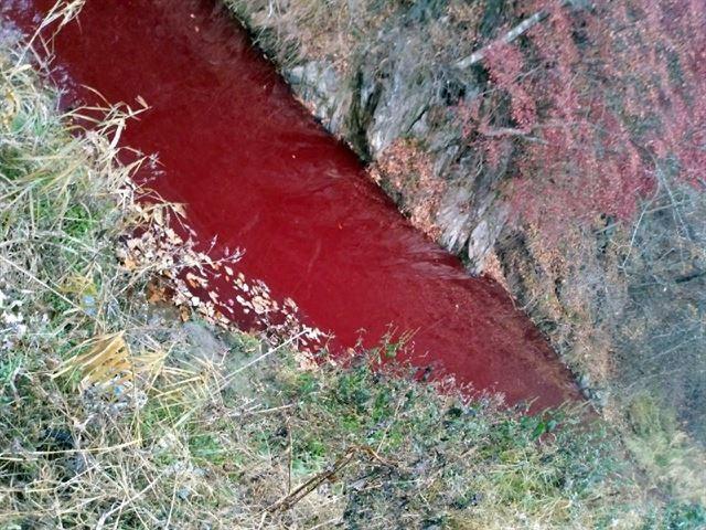 ▲▼撲殺豬隻處理不當,南韓河川被染紅。(圖/漣川臨津江市民網)