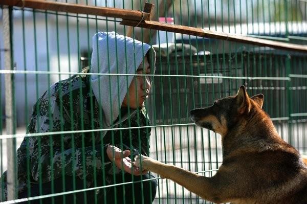 美国人老柯和他的流浪动物 10年救逾200只猫狗