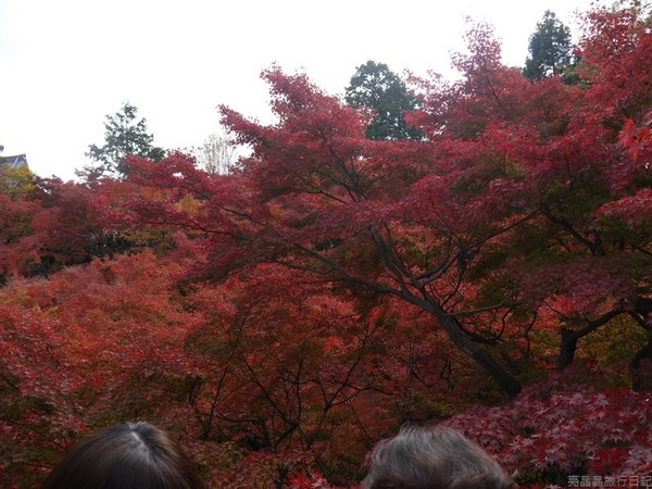 见识到从未见过的红叶配合枯山水,是无法呼吸的美丽,而且,人不多,有