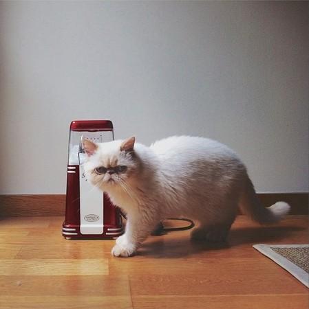 这只喵星人无论喜怒哀乐都一号表情-「臭脸猫」