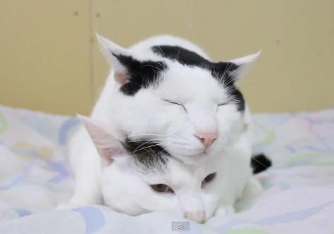 喵星人叠罗汉取暖 同步左右张望宛如「双胞胎猫」