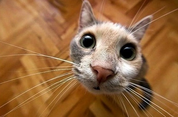 要拍出可爱猫咪大头,最方便的方法是购入『鱼眼』镜头.