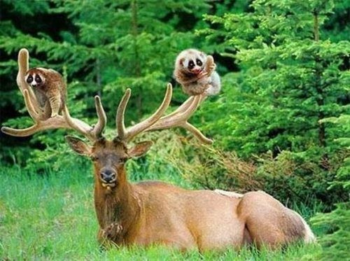 动物界里跨种族友谊,真的想不到牠们会在一起!