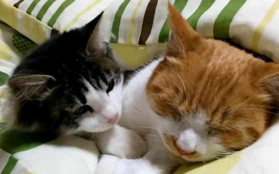 可爱睡醒猫的图片