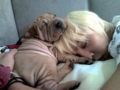 《蓝色生死恋》女主角说下辈子想当树,呆呆狗当偶像明星的爱犬