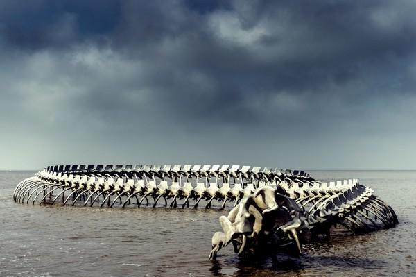 键盘大柠檬 乡民共和国  法国比斯开湾的神秘骸骨,形似传说中的大海蛇