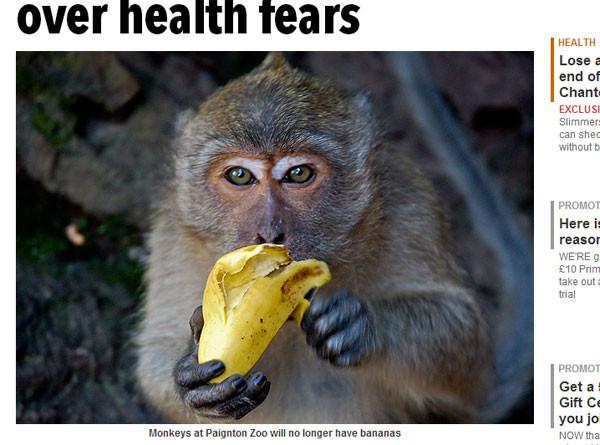 英国动物园禁猴子吃香蕉!健康考量:糖份太高