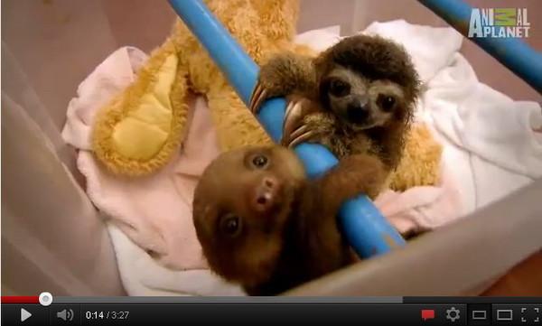 而影片中的主角却是以行动缓慢著称的动物:树懒(sloth,或译树獭 ).