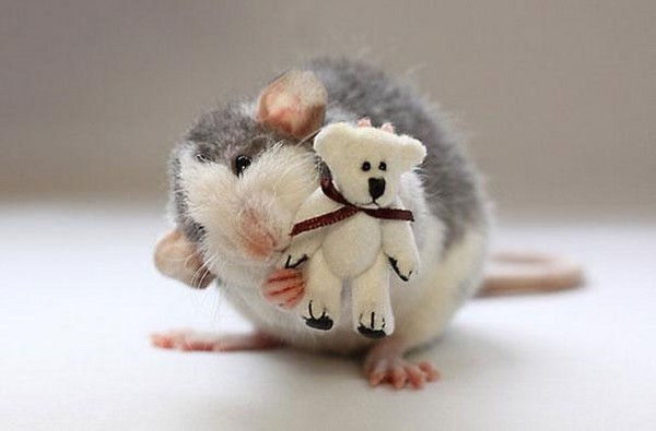 抱布偶睡觉的鼠鼠,萌到好想亲下去!